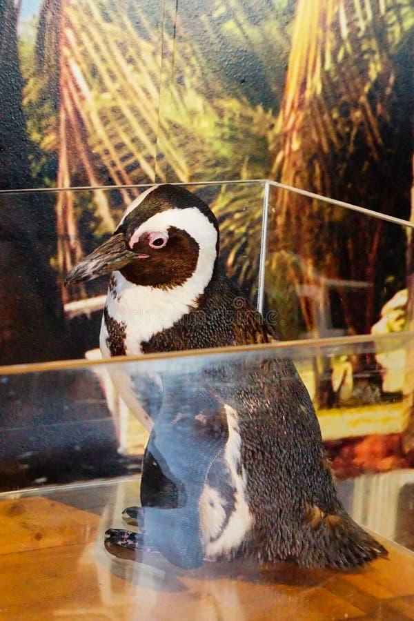 Pinguim bonito imagem de stock royalty free