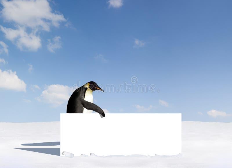 Pinguim com placa imagens de stock