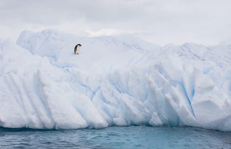 Pinguim de Adelie em um iceberg fotografia de stock royalty free