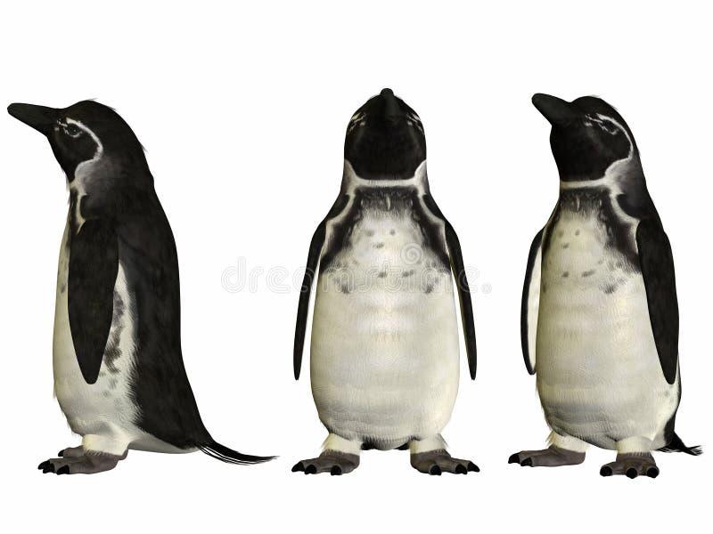 Pinguim de Galápagos ilustração stock