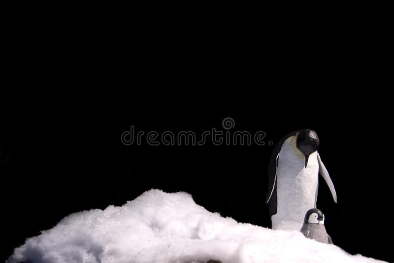 Pinguim de imperador fotos de stock royalty free