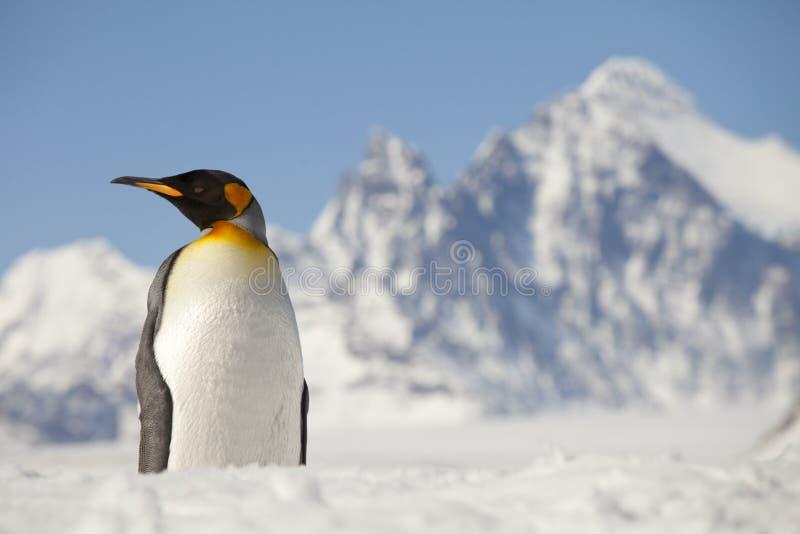 Pinguim de rei na frente dos picos de Georgia Island sul imagem de stock royalty free