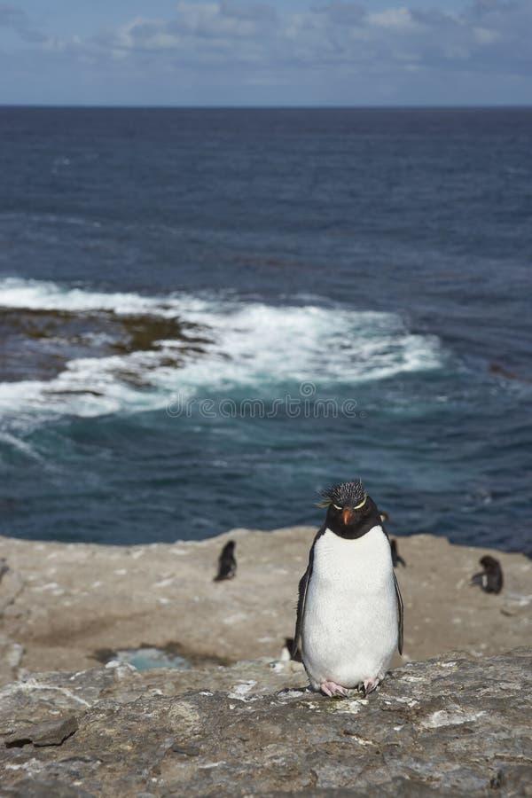 Pinguim de Rockhopper foto de stock