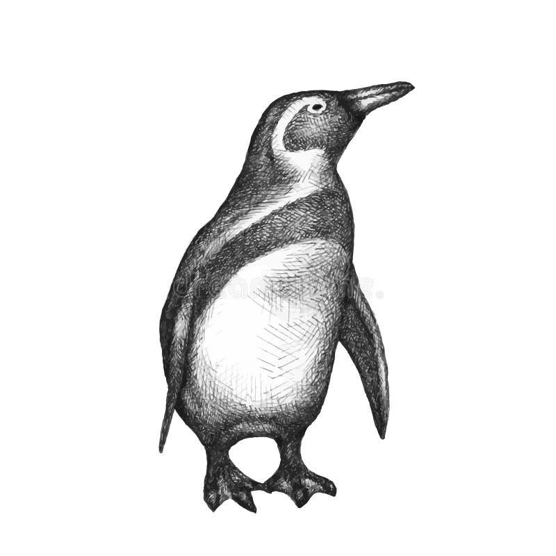 Pinguim isolado no branco Mão desenhada Vetor imagens de stock royalty free