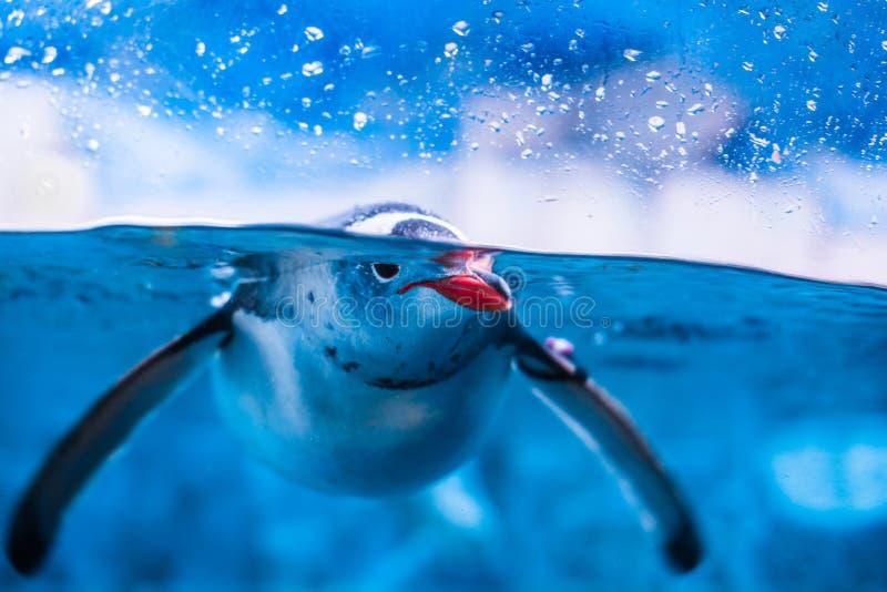 Pinguim no aqu?rio imagem de stock royalty free