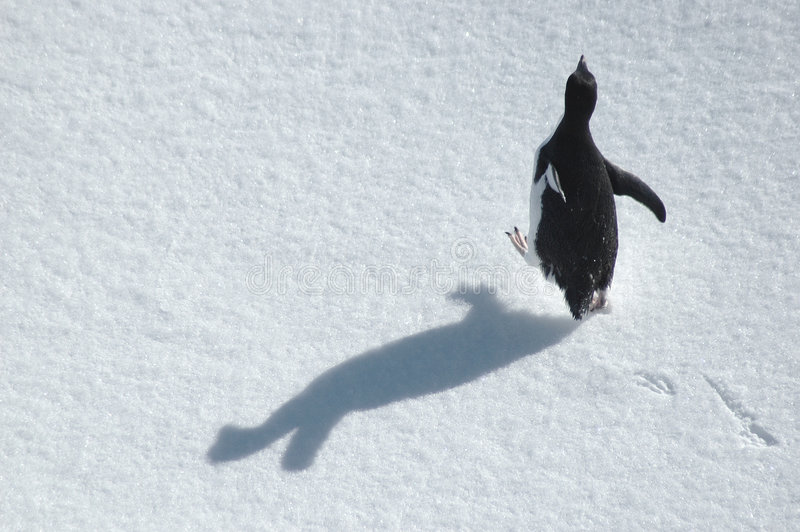Pinguim Running fotos de stock royalty free
