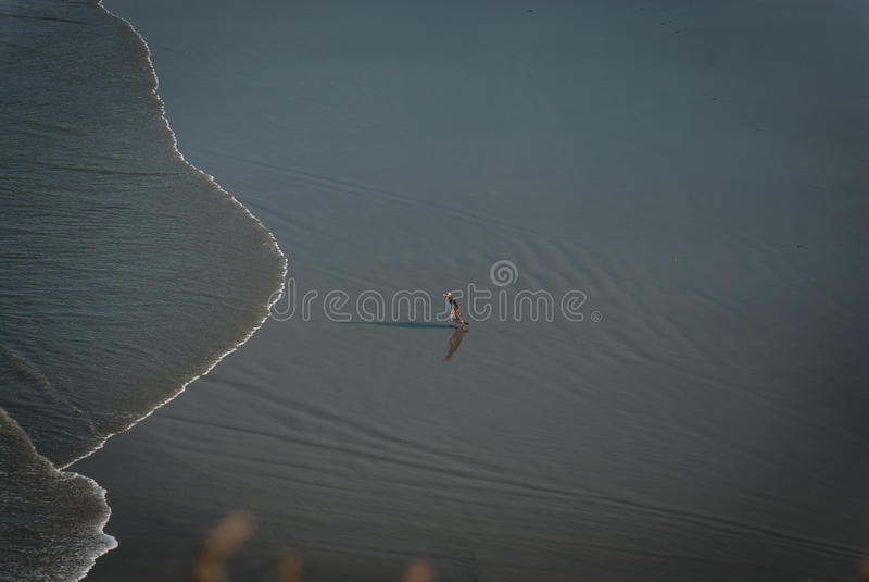 Pinguim só na praia fotografia de stock royalty free