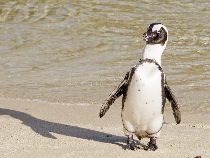 Pinguim sozinho imagem de stock royalty free