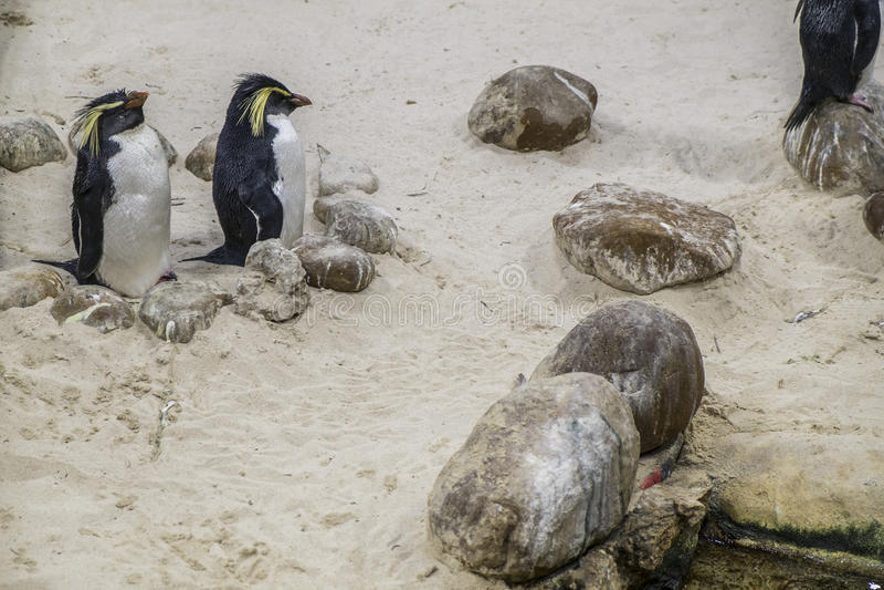 Pinguin Мадагаскара стоковое изображение rf