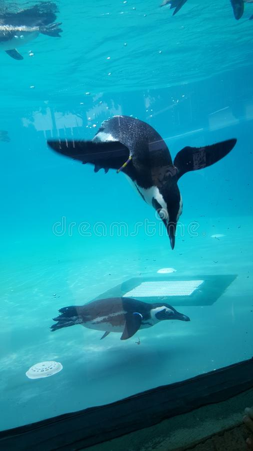 Pinguin 库存照片