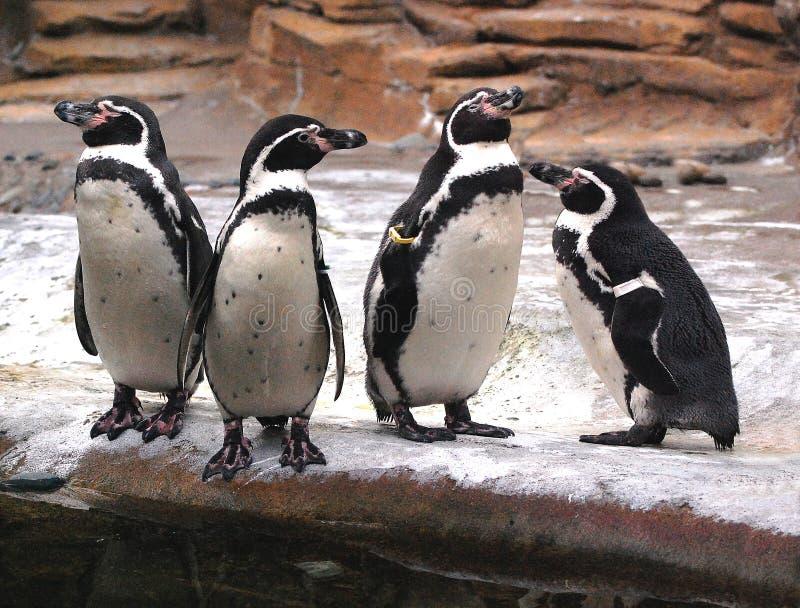 Pinguin bittet: warum sind Sie Kerlschlafen? stockfoto