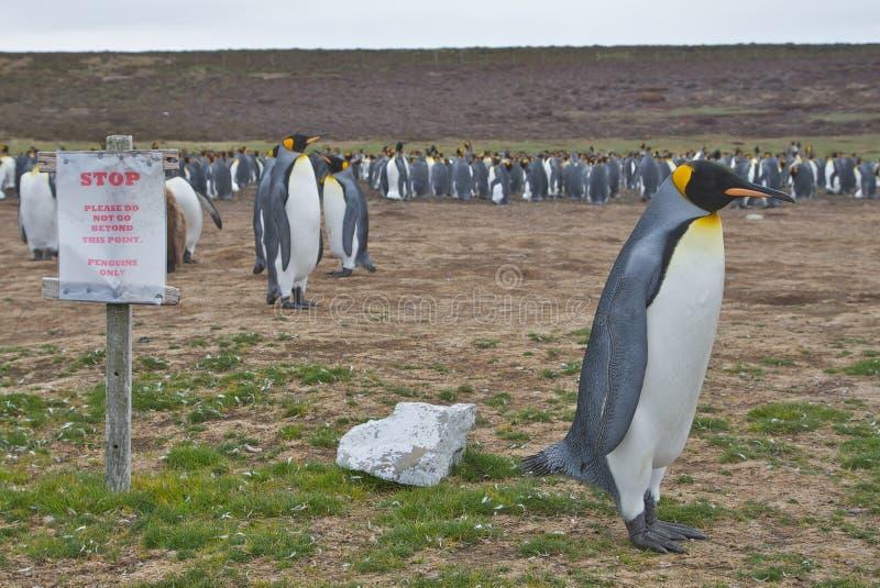 Pinguin gekennzeichneter Bereich lizenzfreie stockfotografie