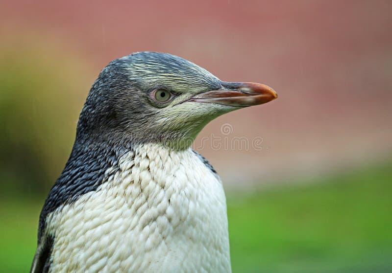 Pinguin im rechten Profil lizenzfreie stockbilder