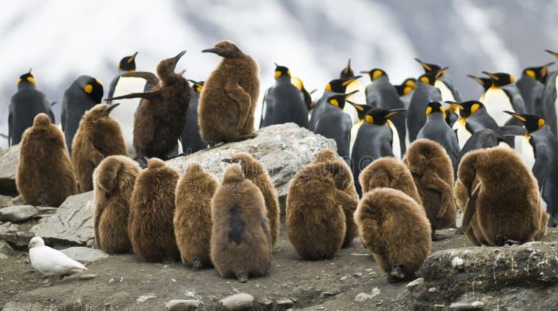 Pinguin-Kabbelei stockfotografie