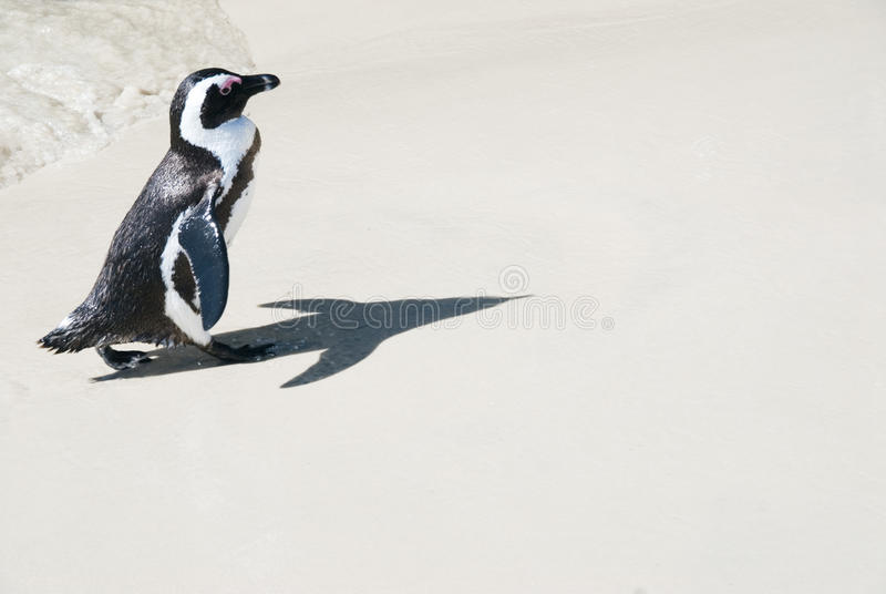 Download Pinguin With Rocket Shadow Royalty Free Stock Photography - Image: 12439367