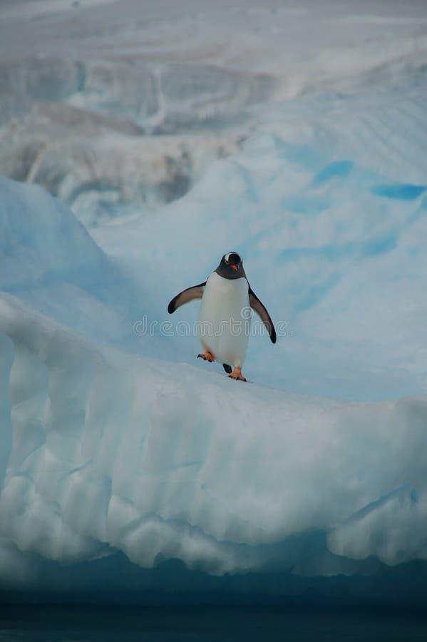 Pinguin Sur La Montre Image libre de droits