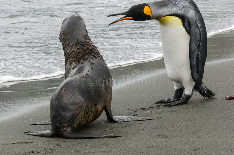 Pinguin und Dichtung lizenzfreies stockfoto