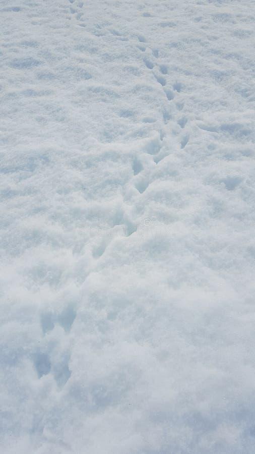 Pinguinabdruck auf dem Schnee stockfotografie