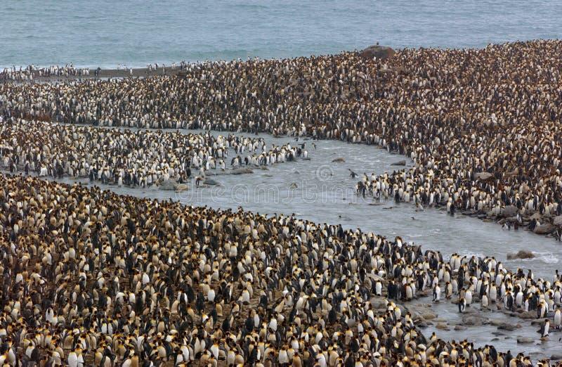 Pinguine lizenzfreies stockfoto