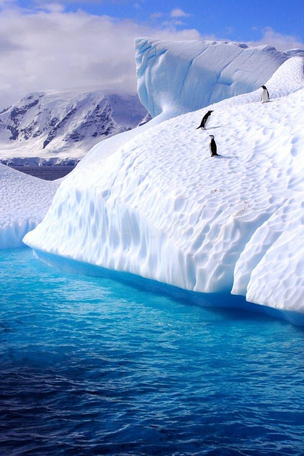 Pinguine auf einem Eisberg lizenzfreies stockfoto