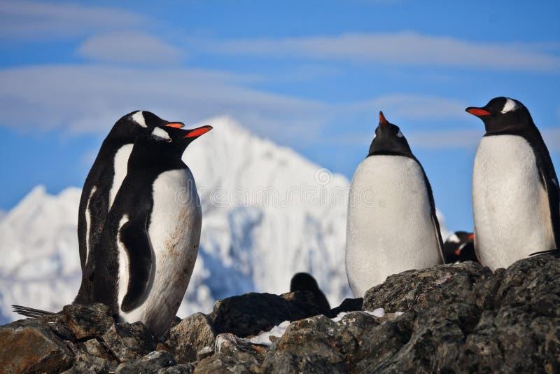 Pinguine auf einem Felsen stockfoto