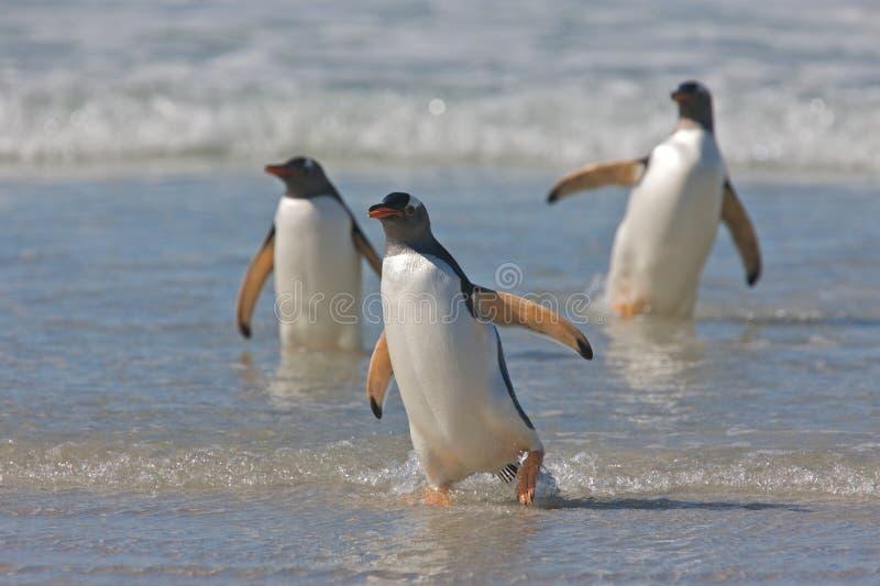 Pinguine auf einem Strand stockfotografie