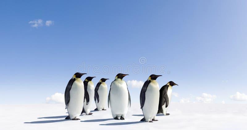 Pinguine auf eisiger Landschaft lizenzfreies stockbild