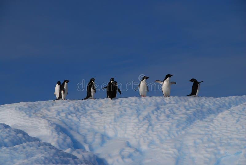 Pinguine auf Eisscholle stockfotografie