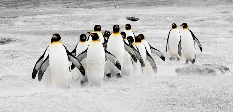 Pinguine in Bewegung lizenzfreies stockfoto