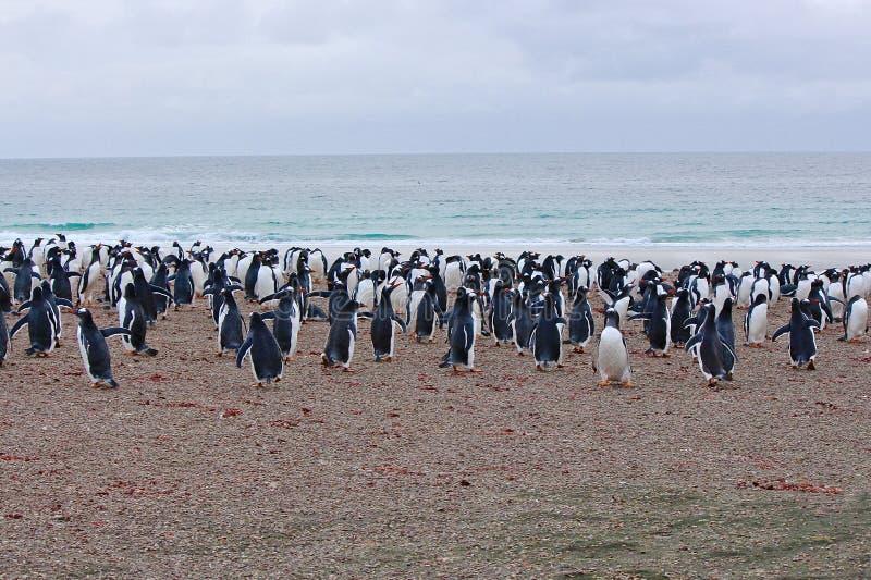 Pinguine, die durch das Meer schweben lizenzfreies stockfoto