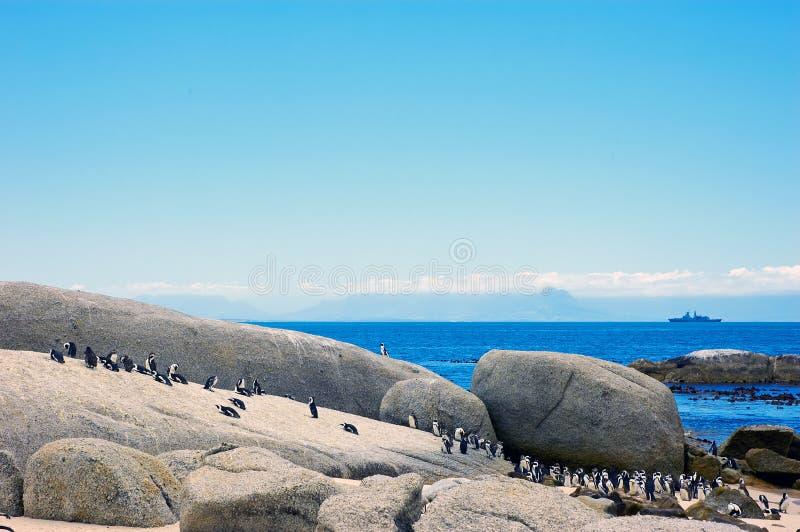 Pinguine am Fluss-Stein-Strand. Südafrika. stockbild