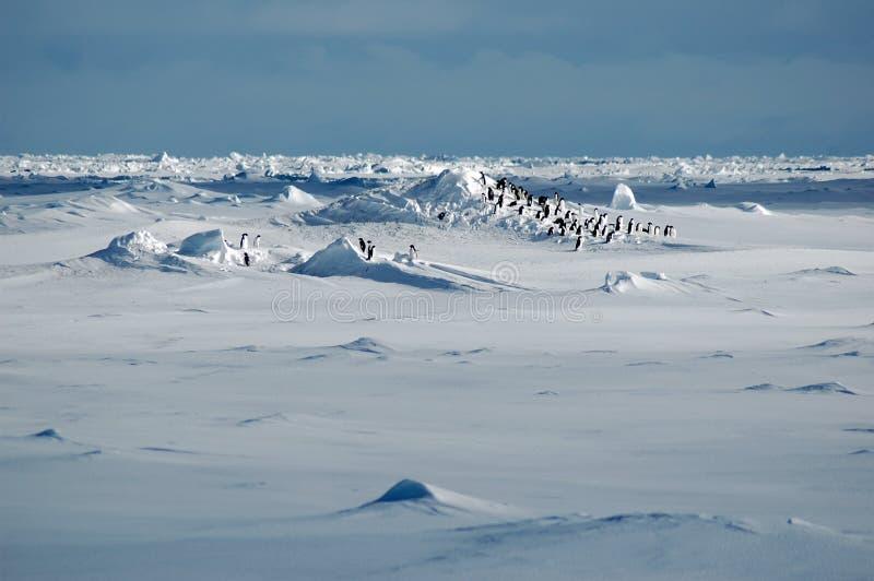 Pinguine im icescape stockfotografie