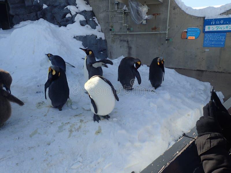 Pinguine im Park lizenzfreie stockfotografie