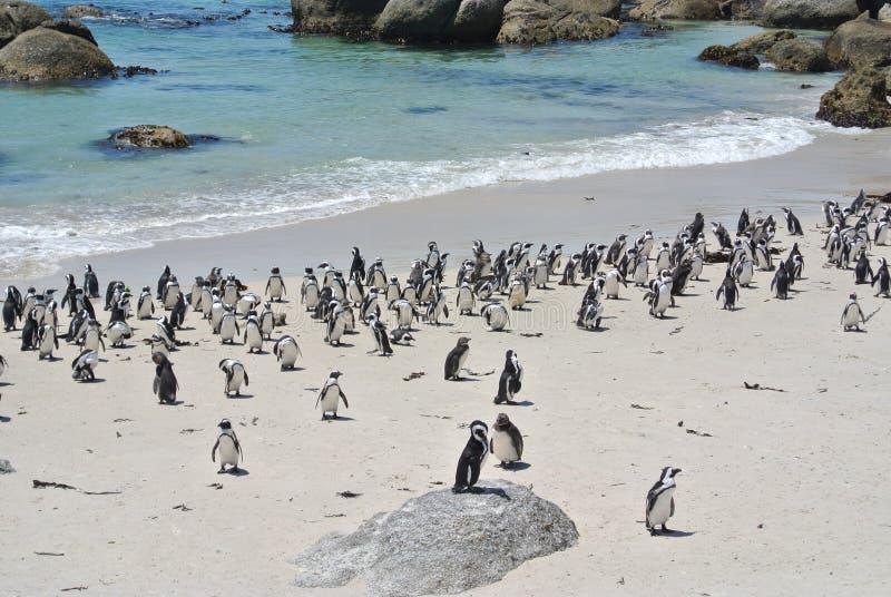 Pinguine am Strand lizenzfreie stockfotos