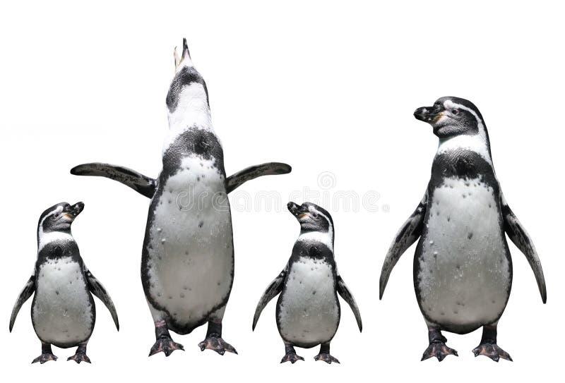 Pinguinfamilie stockfoto