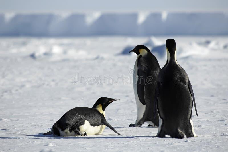 Pinguingruppe in Antarktik lizenzfreies stockbild
