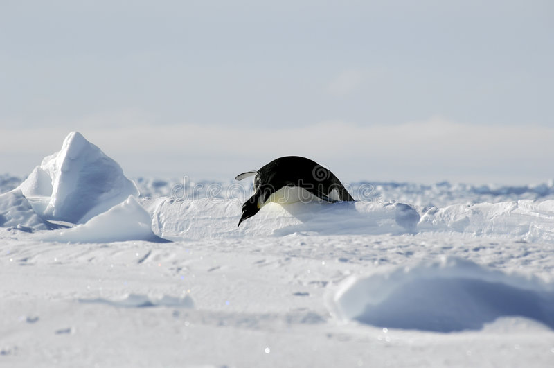 Pinguinhürderennen stockfoto