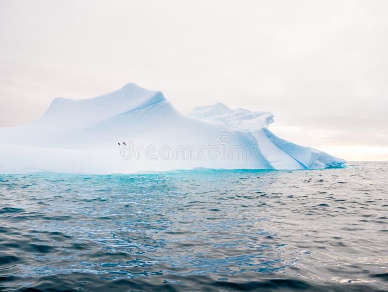 Pinguini di sottogola sul pendio dell'iceberg vicino al northwe dell'isola di Spert immagini stock