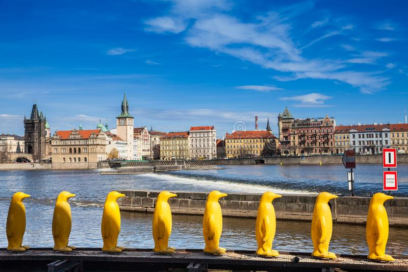 Pinguini gialli al parco di Kampa a Praga fotografie stock
