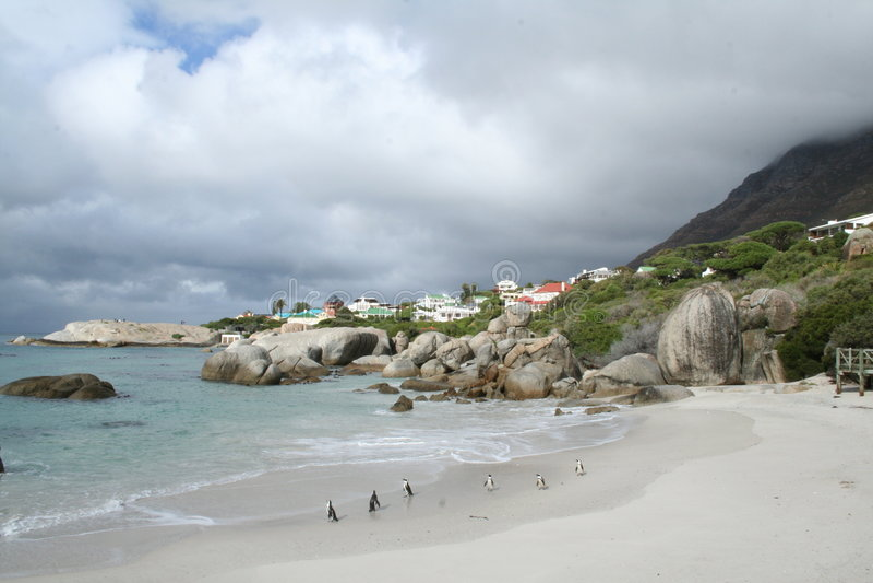 Pinguini in Sudafrica immagini stock