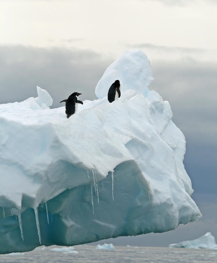 Pinguini sull'iceberg fotografia stock