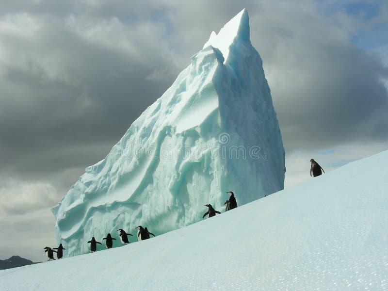 Pinguini sull'iceberg fotografia stock libera da diritti