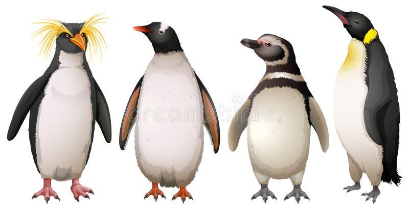 Pinguins ilustração do vetor