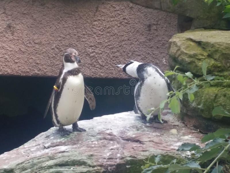 2 Pinguins στοκ φωτογραφίες