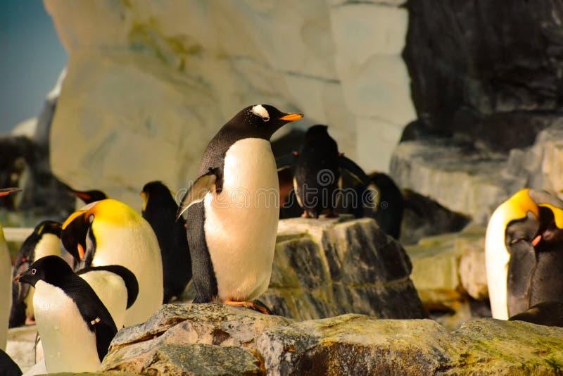 Pinguins com eles amigos em Seaworld imagens de stock royalty free