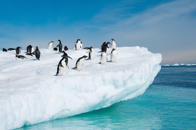 Pinguins de Adelie que saltam do iceberg fotografia de stock