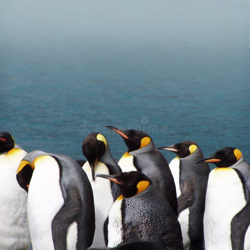 Pinguins de rei em um dia nevoento fotos de stock