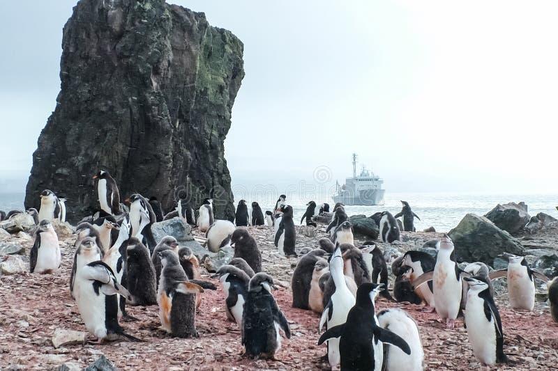 Pinguins em Continente antárctico fotos de stock royalty free