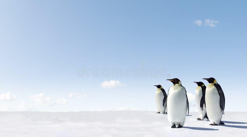 Pinguins no gelo fotografia de stock royalty free