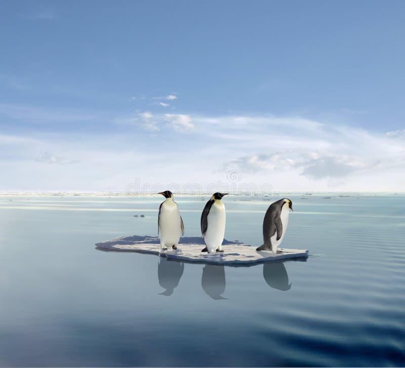 Pinguins no iceberg de derretimento foto de stock royalty free